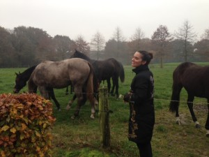 Rebecca with horses in the netherlands